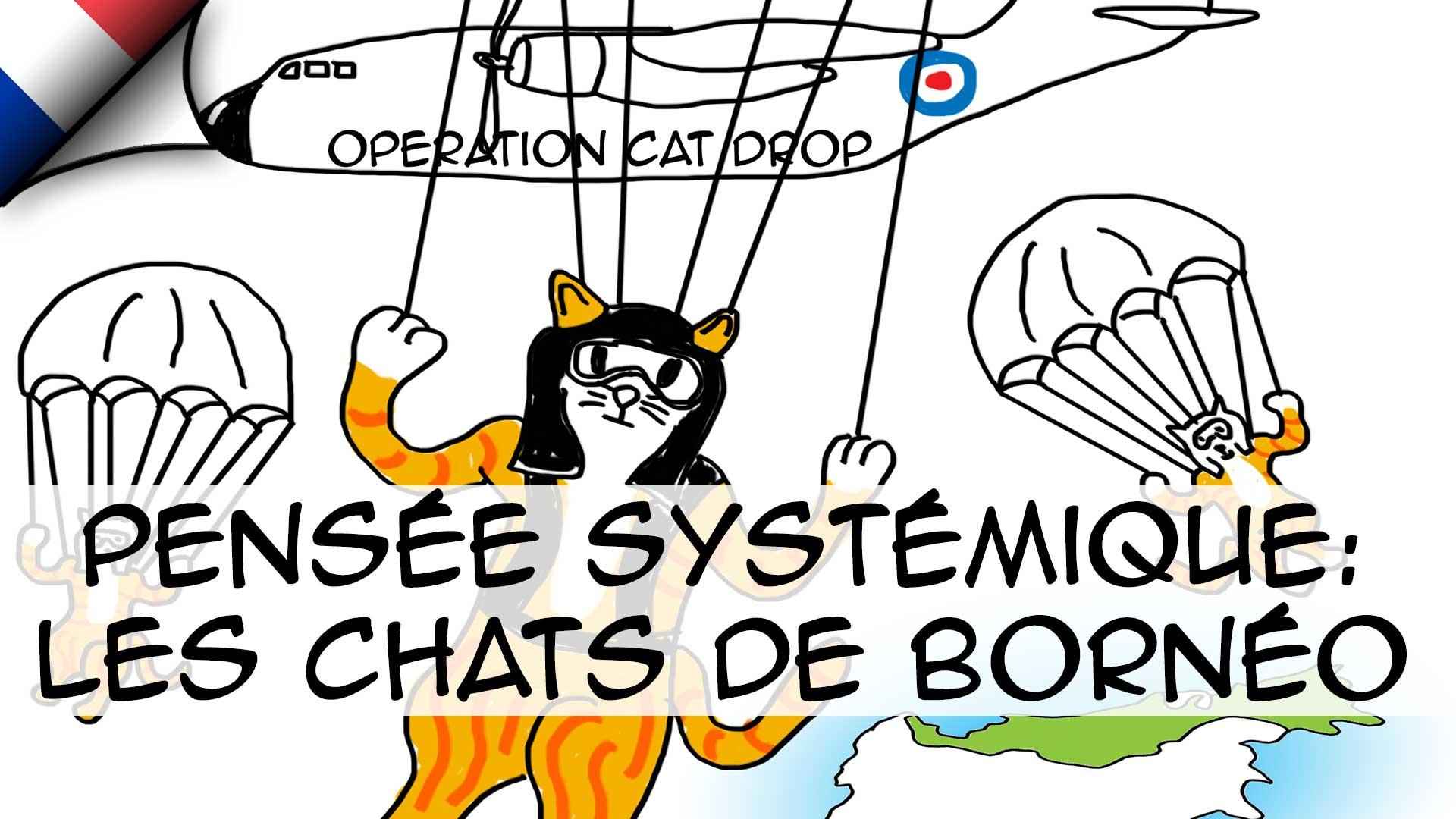 Pensée systémique: L'histoire des chats de Bornéo