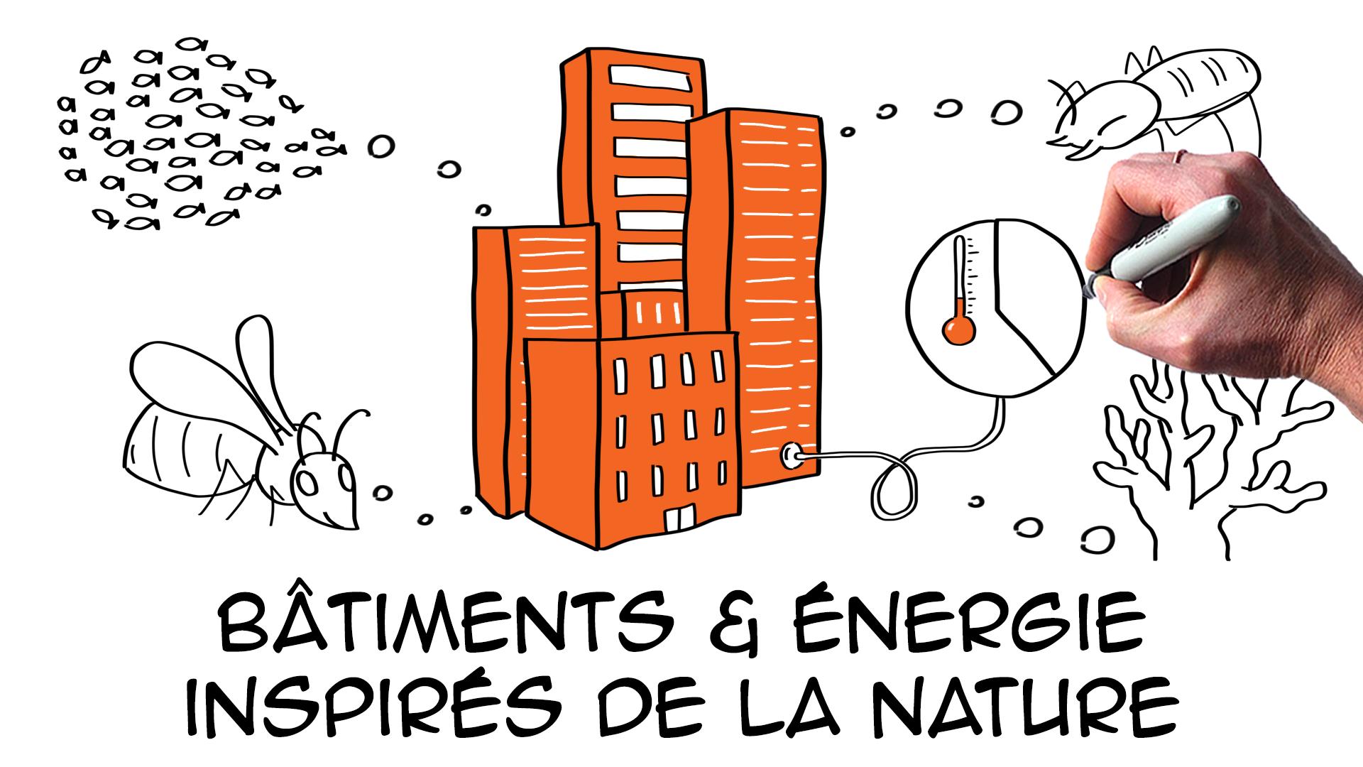 5 exemples de biomimétisme pour le bâtiment et l'énergie